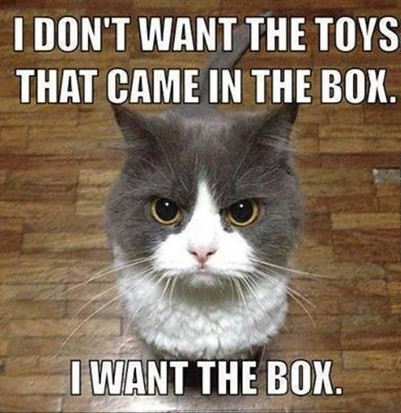 I want the Box