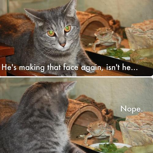 Frog Nope
