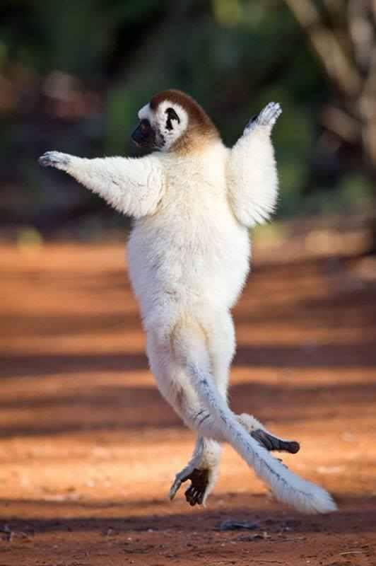 Funny Dancing Animals