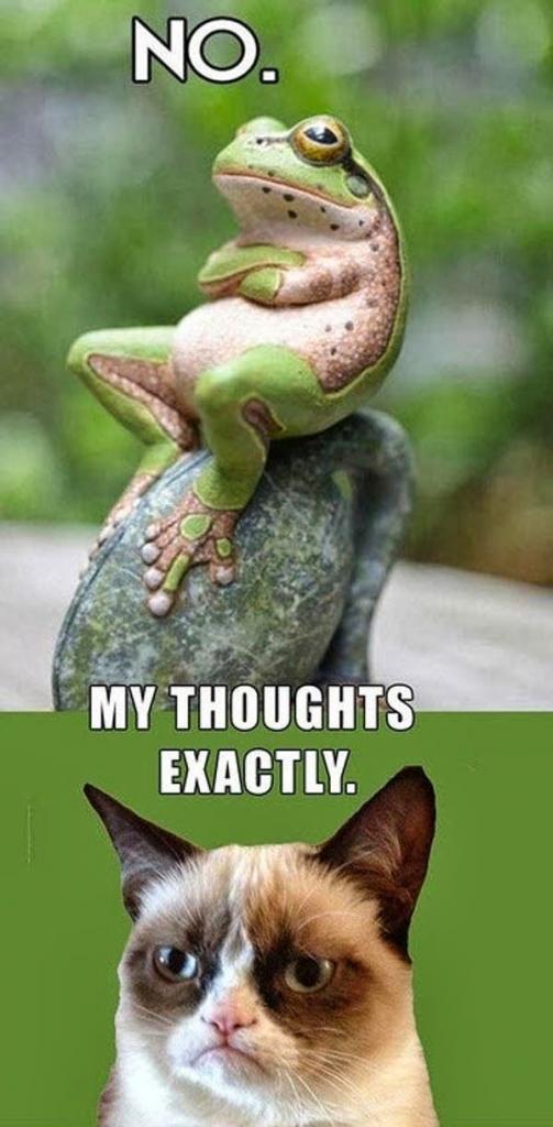Frog Vs Cat.. Funny