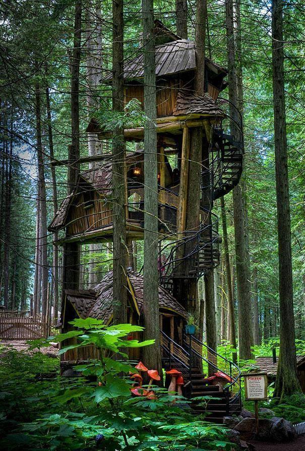 Beautiful Home Design Build on Tree