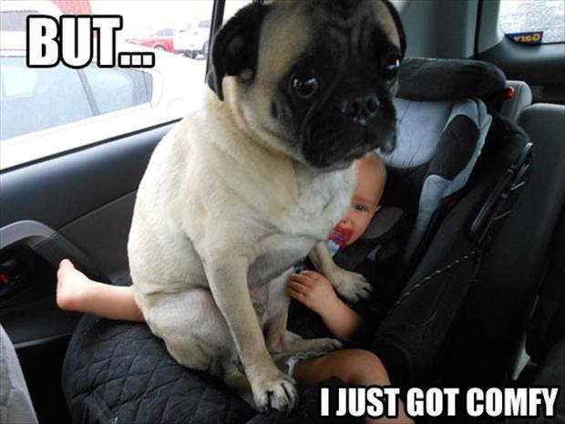 Comfy Pug
