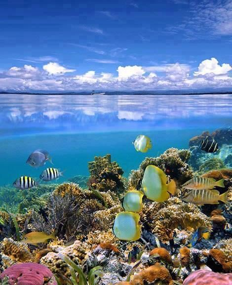 Under the water in Fiji