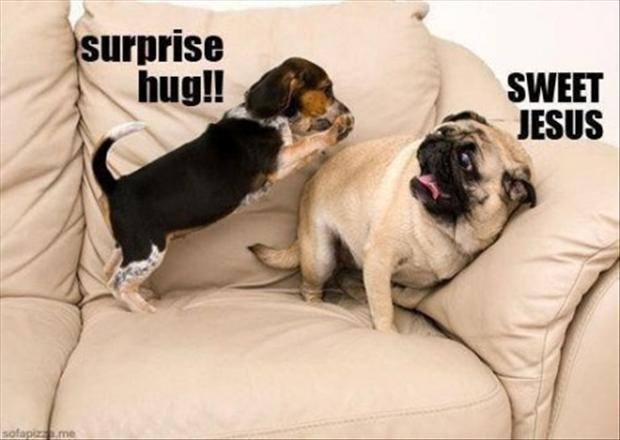 Dump A Day funny dogs surprise hugs