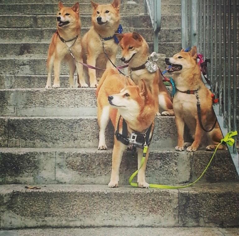 Spotted this gang in a ruff area of Germany