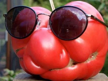 Hahaha! Funny Tomato!