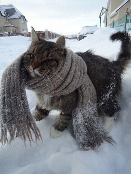 Baby It,s Cold Outside
