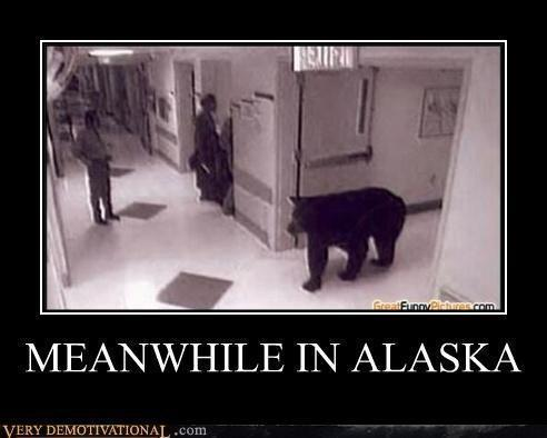 MEANWHILE IN ALASKA.. Bear in the Building