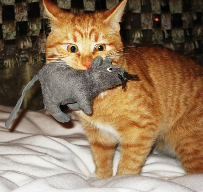 Cats Eats Toy Mouse
