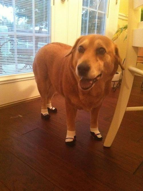 Dogs in toddler socks are hilarious.