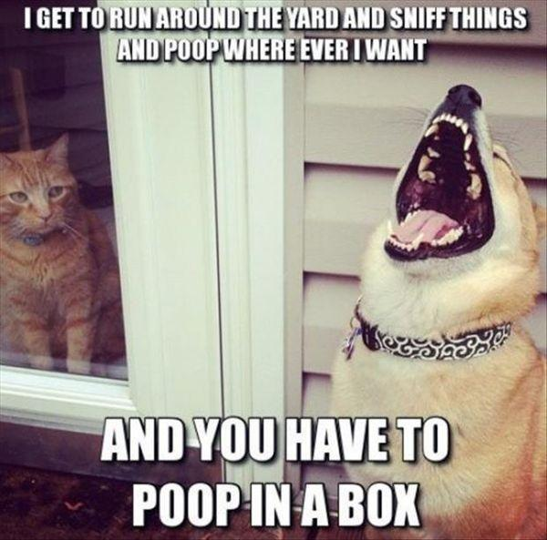 Poop in a Box... lol