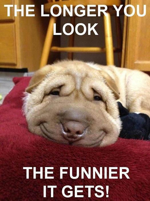 Funny Dog is Funny... No matter what!!!