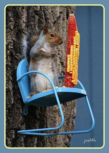 very cute squirrel feeder