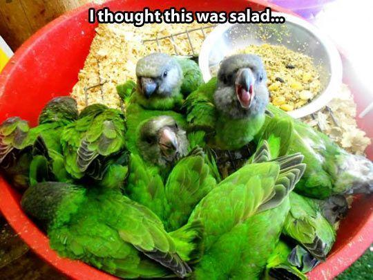 That's a tasty salad