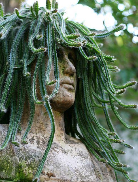 succulent statue