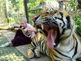girl_biting_a_lion
