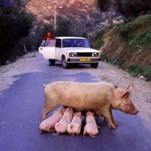Breast feeding in public causes traffic jam.