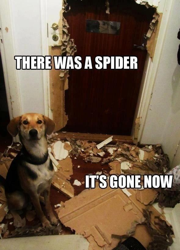There was a spider. LOL!