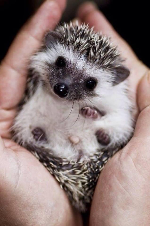 Aww!! so cute eyes