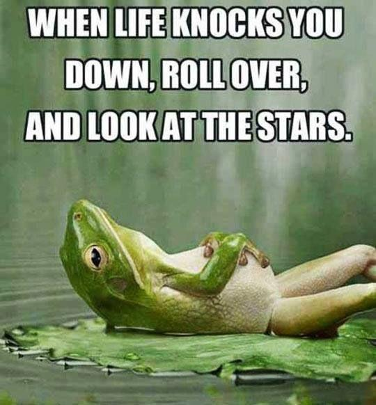 Funny Frog Photos and Quotes