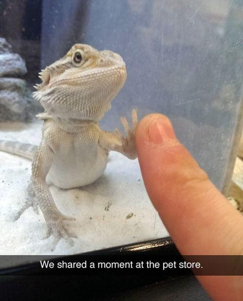 And in that moment..at the pet store.. I swear we were infinity..