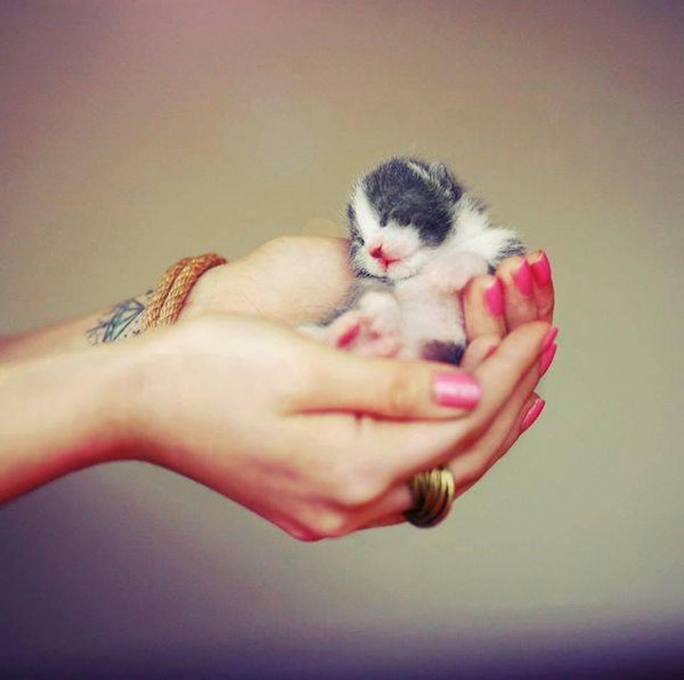 10 Most Amazing Cutest Tiny Hand Held Pet Photos