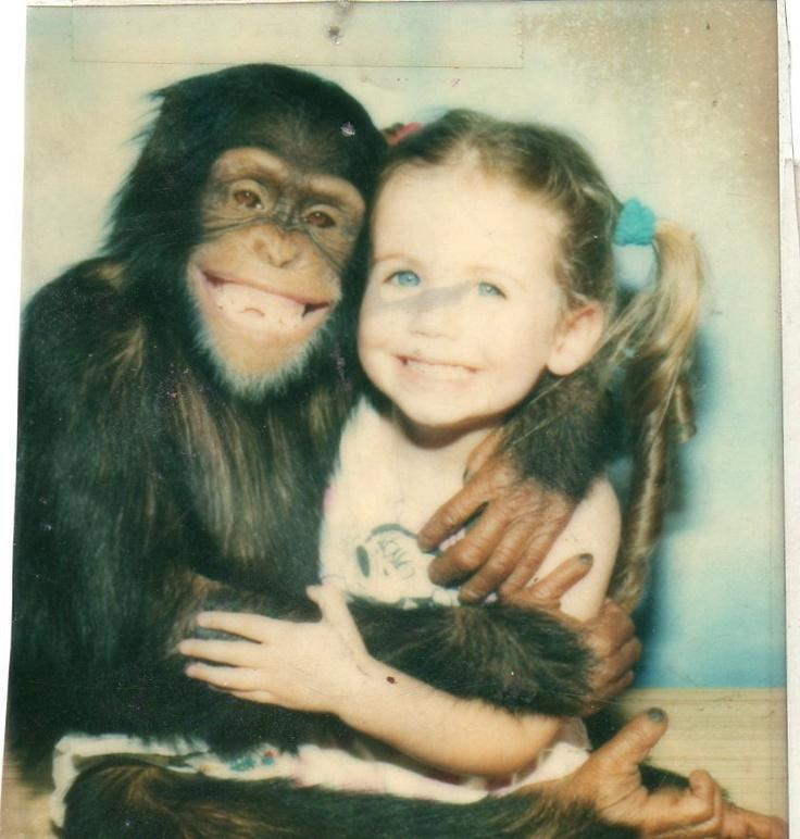 Because chimpanzees will eat your face off