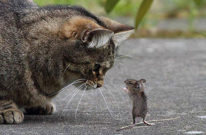 Cat and Rat... Having some Chat