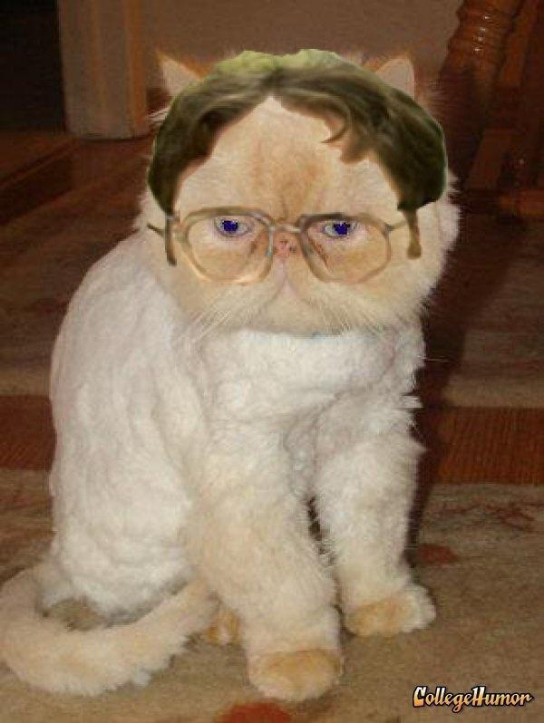 Dwight Cat!