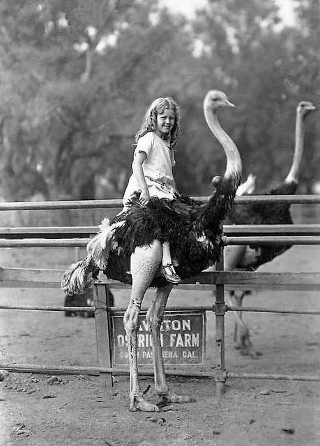 This is on my bucket list.  my great-grandpa used to ride ostriches in