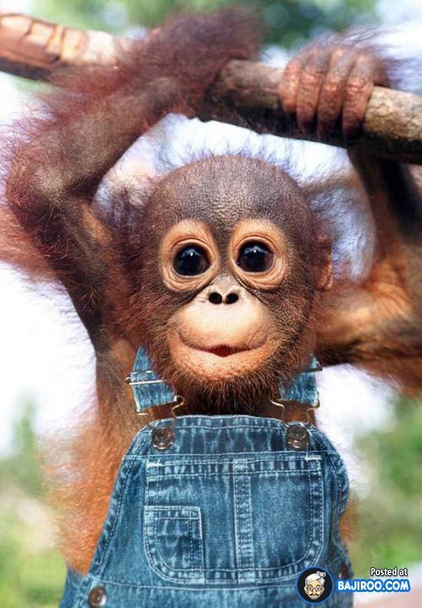 Crazy Monkey Like Bajirao