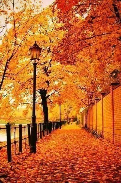 Amazing outdoors autumn scenes