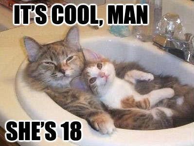 Funny cat life, cats life fun, funny cat