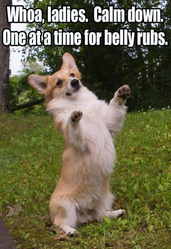 One at a time... Funny Dog Photos