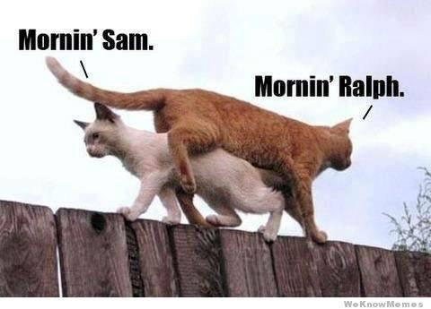 Cat way of Morning... LOL