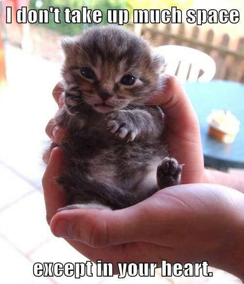 So true... Adorable