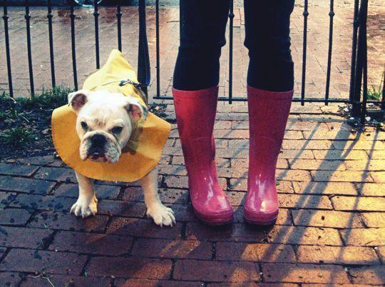 ha doggy rain coat