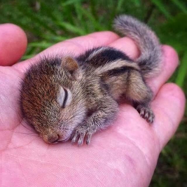 awww! so cute photo