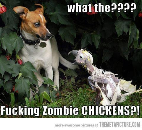 Zombie Chicken… LOL