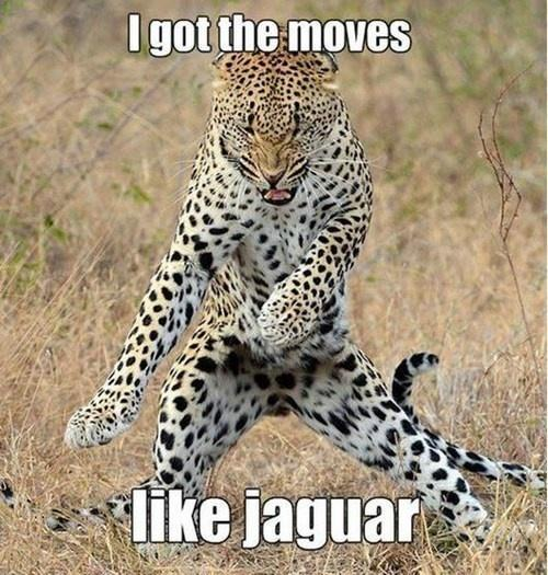 I got the Moves... Jaguar Dancing Picture