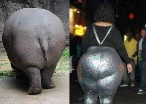 Hippo Booty - Who Wore It Better