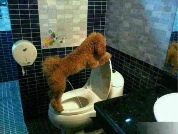 Lol... Good boy!