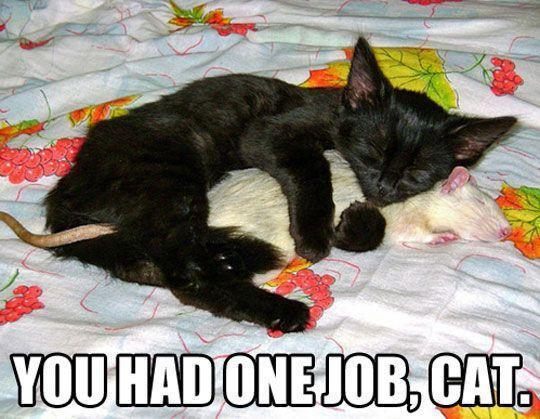 One job, cat…