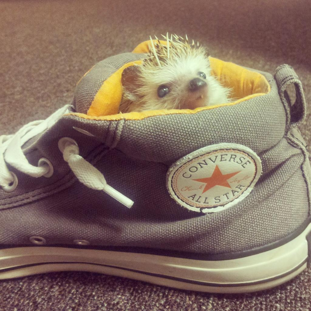 My scraggly one toothed hedgehog found his way into my shoe. I guess i