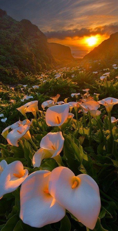 My favorite flowers! The Lily of the valley has made the calla lily my