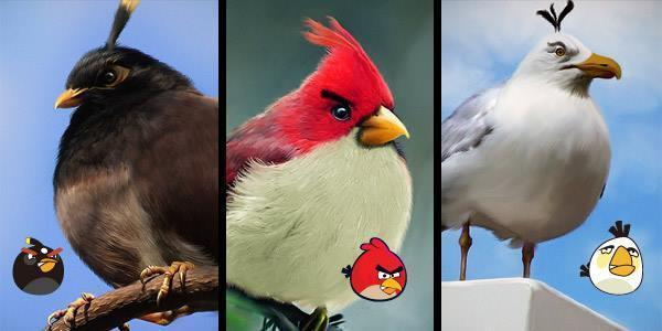 Morning guys and look what i found.. Angry Birds.. are real!!! Have a