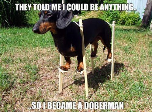 They told me I could anything...so I became a doberman