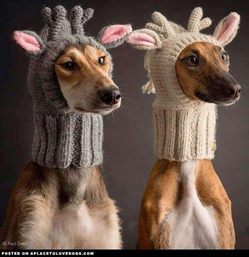 Cute Dogs In Hats - A Place to Love Dogs