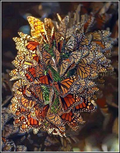 Beautiful Butterflies having a meeting :)