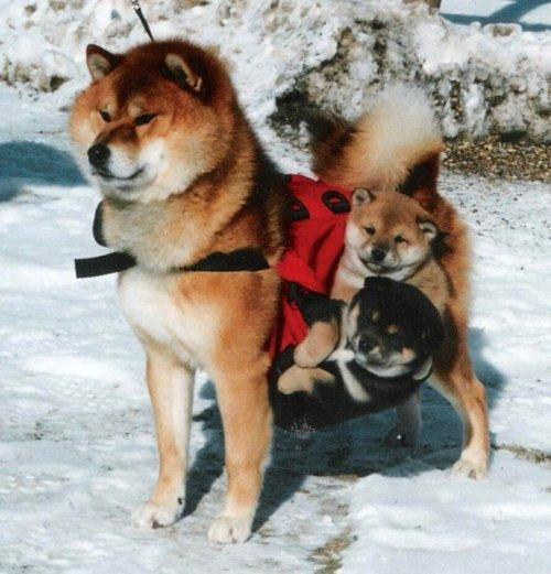 No shibe left behind, we go to the moon together